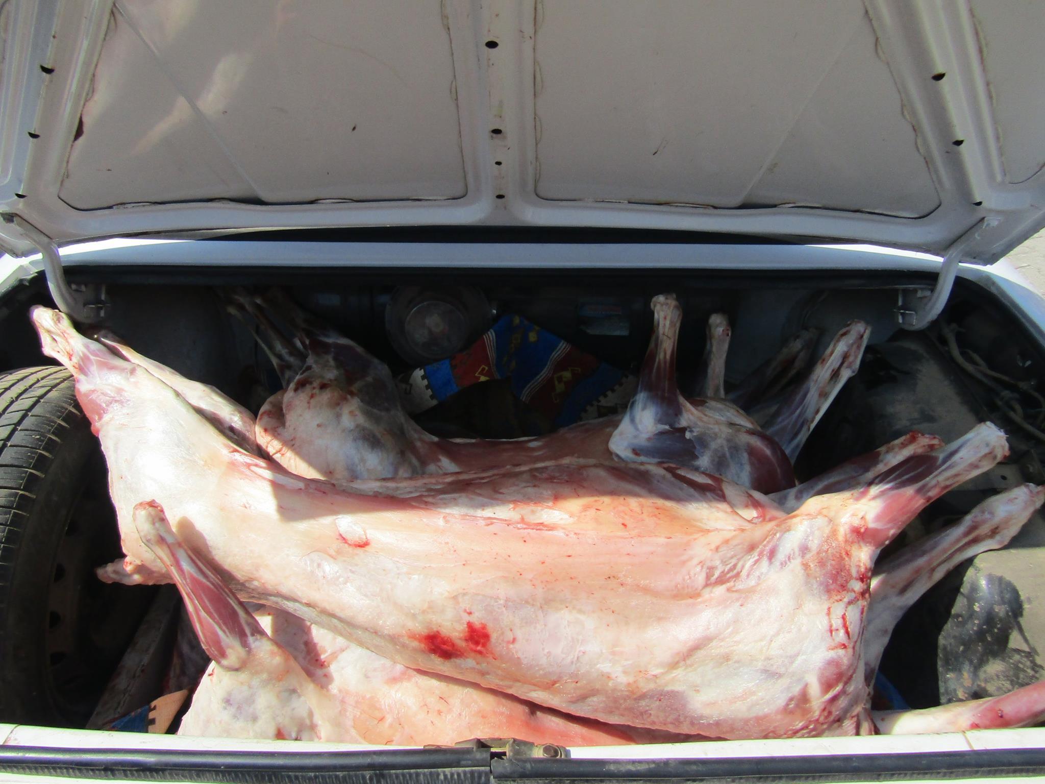 Kaçak kesilen etler otobilin bagacında çıktı