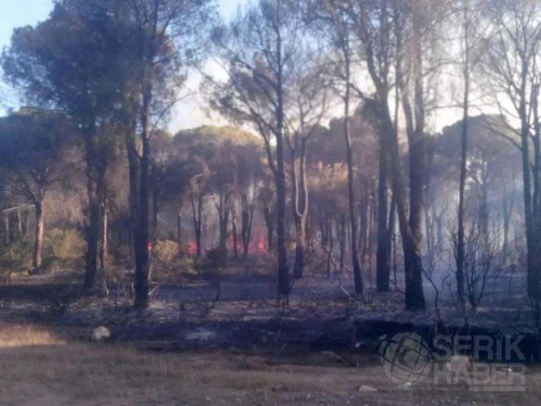 Kumköy'de Orman Yangını