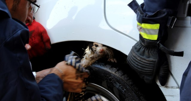 Kepez'de Yavru Kedi, Girdiği Kamyonetten Tazyikli Suyla Çıkarıldı