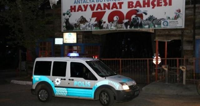 Antalya'da Hayvanat Bahçesinden 'Kurt' Kaçtı