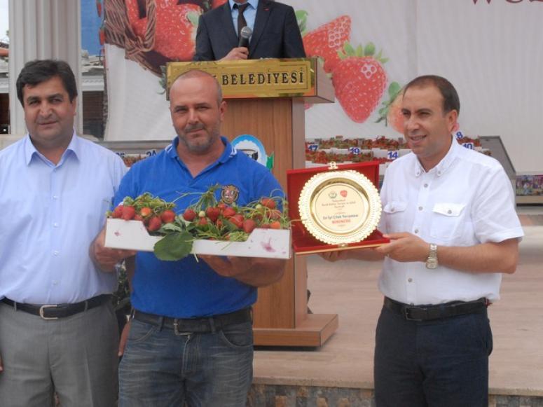 Festival'de En İyi Çilek Üreticileri Ödüllerini Aldı