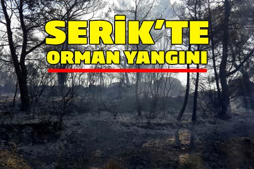 Serik'te orman yangını!
