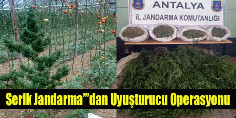 Serik Jandarma'dan Uyuşturucu Operasyonu