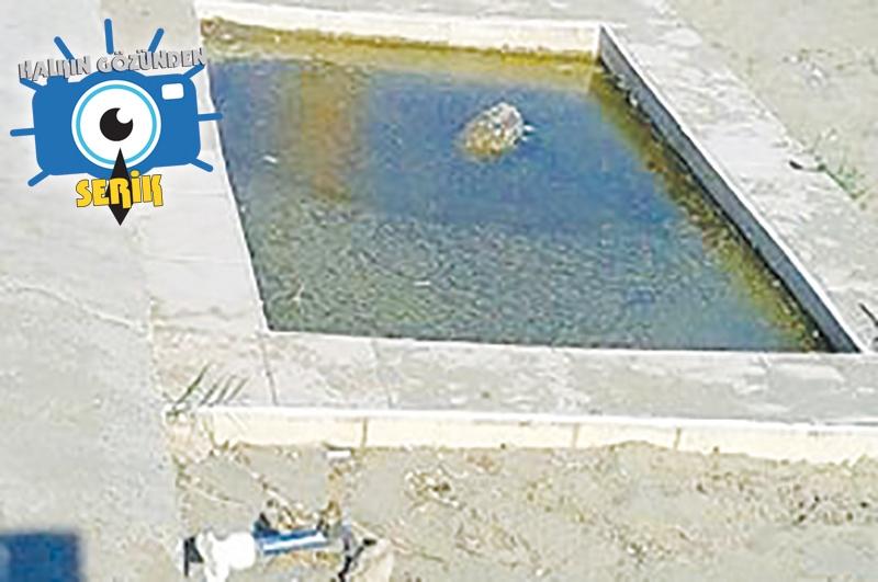 Halk Plajında Kurbağalı Havuz
